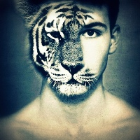 V srdci tigra